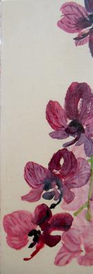 Orchid Iweb