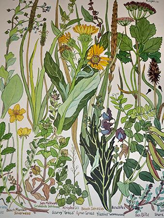 Spit Flowersweb