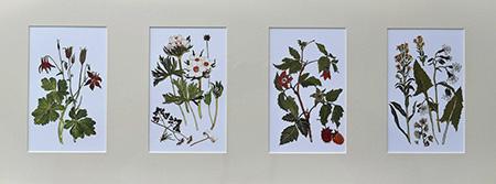25 Four Botanical Web