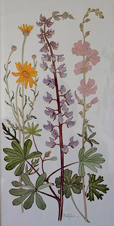 Wildflower Trio web
