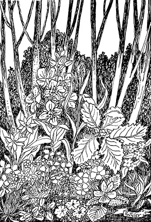 Wildflowers in the Alders web